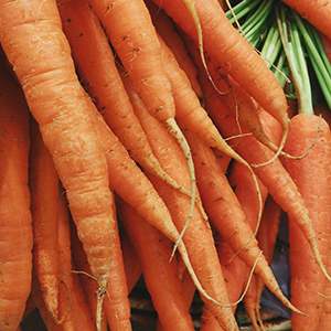 Close up view of a bunch of carrots
