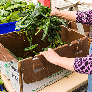Woman filling cardboard box with organic spinach